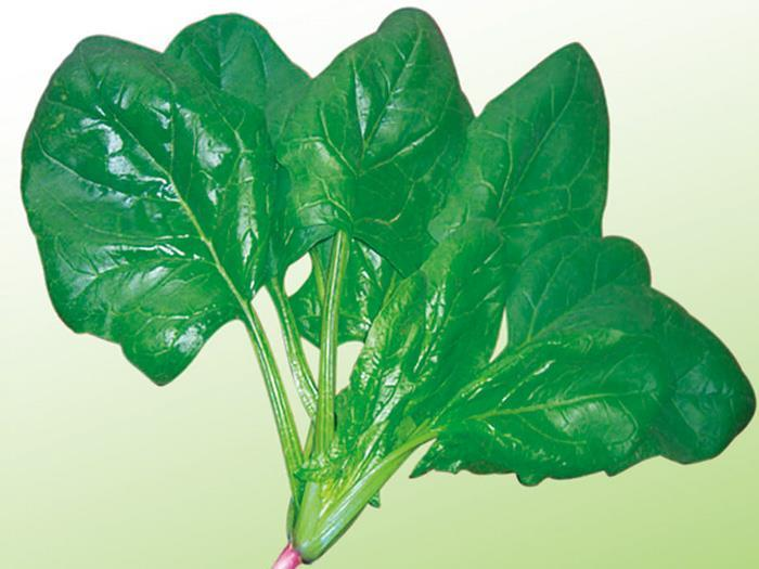 Spinach seeds-Summer green spinach