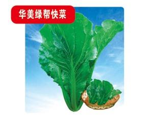 Cabbage seeds-Huamei green for quick dishes